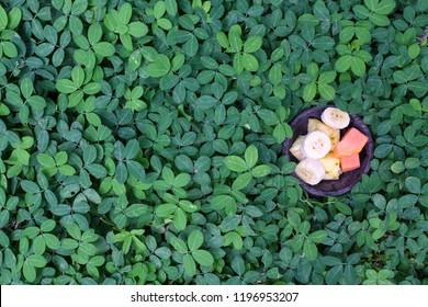 Papaya Slices Top View Images, Stock Photos & Vectors   Shutterstock