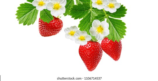 sweet ripe strawberries on white