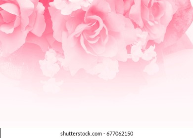 Sweet rose in soft style for background