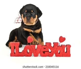 Sweet Rottweiler puppy sitting with an I Love You sign on a white background.