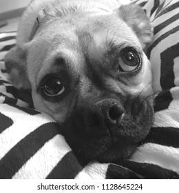 Sweet sad puppy