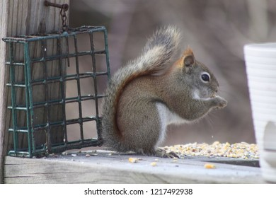 sweet small squirrel sitting up eating birdseed on a porch