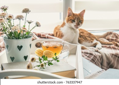 Sweet welcoming home with flowers, tea and a cat. Cozy house concept