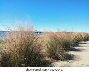 Sweetgrass in Charleston, SC