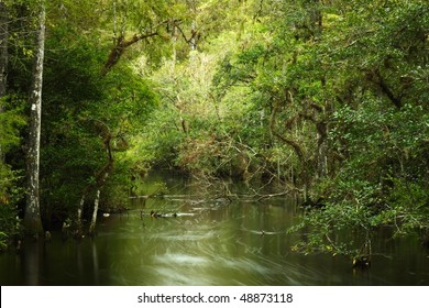 Sweetwater Strand in the Florida Everglades, Big Cypress National Preserve