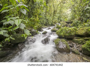 A swift flowing stream running through pristine montane rainforest on the western slopes of the Andes in Carchi province, Ecuador