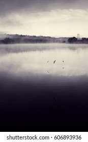 Swifts above water. Flock of birds flying over river in morning mist. Beautiful summer rural landscape. Foggy mystical weather. Toned black and white photo