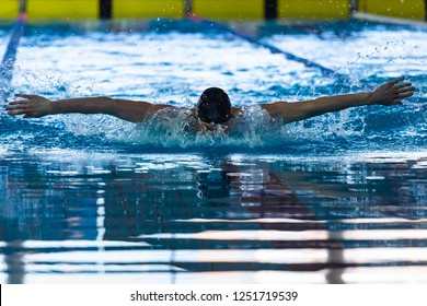 Swimming butterfly stroke in the sports pool