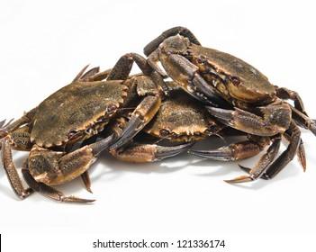 swimming crabs