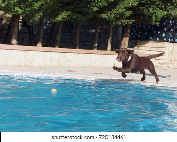 the swimming dog in the pool