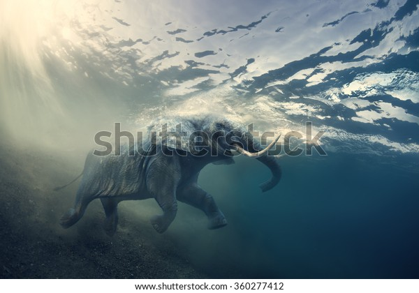 Swimming Elephant Underwater. African elephant in ocean with sunrays and ripples at water surface.