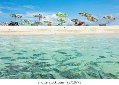 Swimming Fishes and Beautiful Beach in Sunny Day at Phuket Thailand