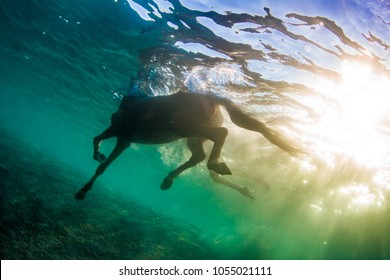 Swimming horse in clear sea, underwater shot against water surface and blue colorful rippes on background
