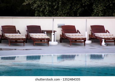Swimming pool of luxury holiday hotel, amazing view and scene of seagull enjoying alone. Relax near pool with handrail, sunbeds, sun loungers and parasols waiting for tourists in tropical resort.