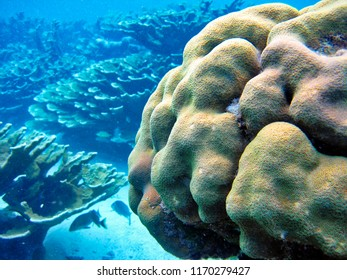 Swimming with sea animals in Hol Chan Marine Reserve, Belize