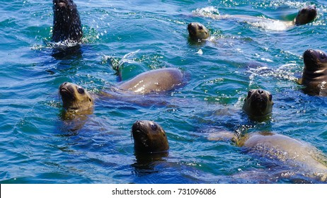 Swimming With Sea Lions in Ballestas Island in Lima Peru