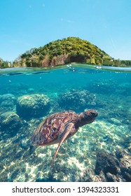 Swimming turtle in blue sea water on background green hill and coral reef waterline view. Beautiful sea turtle swimming underwater. Apo Island, Philippines.