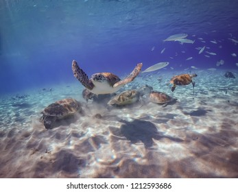 Swimming with Turtles on the Caribbean Island of Curacao