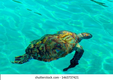 Swimming with the turtles, Redang Island, Malaysia