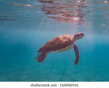 Swimming with turtles at sunset  Views around the small Caribbean Island of Curacao