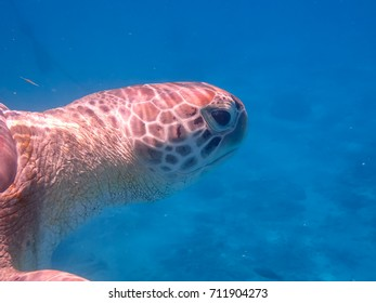 Swimming with turtles   Views around the Caribbean island of Curacao