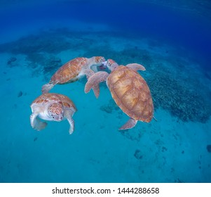 Swimming with Turtles Views around the small Caribbean Island of Curacao