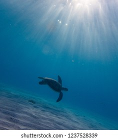 Swimming with Turtles  at Westpunt on the Island of Curacao in the Caribbean
