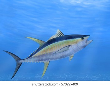 A swimming Yellowfin tuna (Thunnus albacares) illustrated by Steven Russell Smith.
