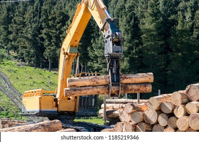 A swing loader picks up pine logs to stack them onto a logging truck at a forestry site
