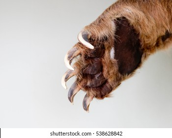 Swinging bear paw