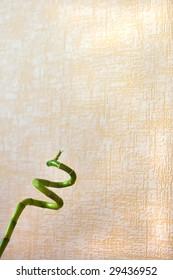 swirl green bamboo on wallparer pattern background