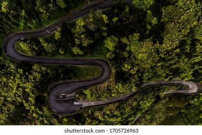 Swirling road between trees. This is the road to Fajã das Almas in Saõ Jorge island.