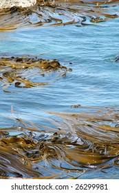 Swirling Seaweed off the coast of New Zealand