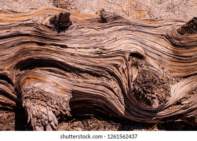 Swirling wood texture