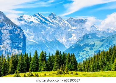 Swiss Alps/ Mountains/ Forest