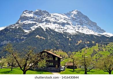 swiss alps Peak near Grindelwald,switzerland - snow on top springtime in the valley