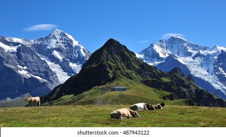 Swiss Alps seen from Mannlichen, Bernese Oberland, Switzerland