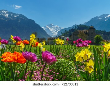 Swiss Alps Valley with Flowers in Interlaken, Switzerland