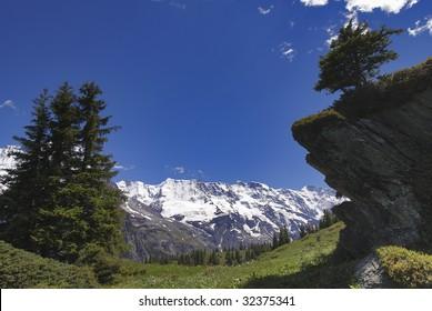 the swiss berne alps,