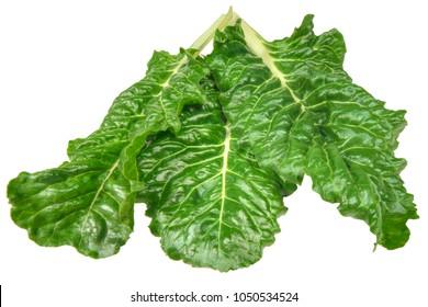 Swiss chard (Beta vulgaris) leaves on a white background.