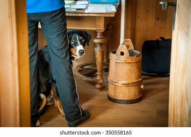A Swiss dog is hiding behind owner's lag.