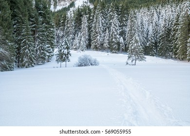 A Swiss forest covered in snow during winter