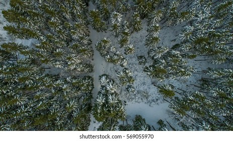 A Swiss forest covered in snow during winter shot from above with a drone