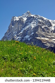 swiss mountain Meadow in front of Eiger Peak, Grindelwald,switzerland