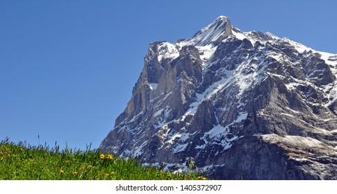 swiss mountain Meadow with snowy Peak near Grindelwald