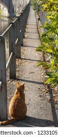 In the Swiss village of Saint-Ursanne a cat is sitting and watching the alley by the side of the river Doubs