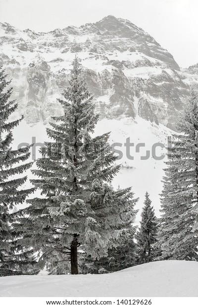 Switzerland Appenzell Peak Sentis Winter Forest Stock Photo