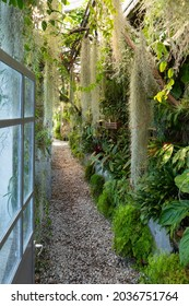 Switzerland, Ascona, 1 Sept 20. Inside the greenhouse with exotic plants on the isle of Brissago