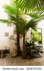 Switzerland, Locarno, 31 Aug 20. Courtyard with palm trees