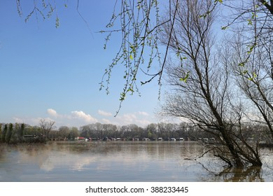 The swollen river, willow trees and distant houses on water